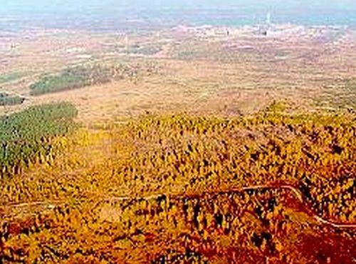 Die roten Wälder